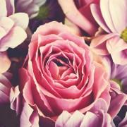 aroma a rosas Ambar Perfums
